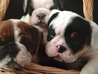 I have all male pups 8 weeks old starting at 2500 and