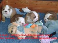 We beautiful Male/females English Bulldog Puppies