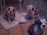 We have 1 female and 2 males for sale. The 2 males are