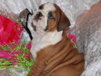 ONLY 1 LEFT ! ! ! AKC registered and comes with full