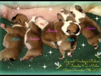 Introducing cutie pie Gia! Bella and Diesel are the