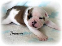 Meet handsome Duncan! We are pleased to announce the
