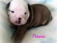 Meet precious, little Petunia! **SOLD TO JASON PINKSTON