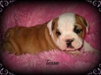 Meet cutie pie Tessa! Pearl and Diesel are the proud
