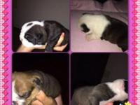 A have four females puppy's that will be ready for