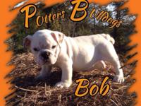 We have some beautiful english bulldog puppies ready to