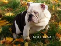We would like to introduce you to handsome Shilo! Shilo