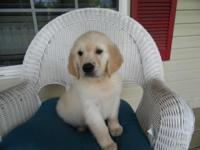 Hi I am 8 weeks old and looking for my family. I am a