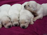 We have one female & one male still available in this