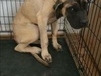 5 month old, vaccinated, chip, not fixed, gental, shy