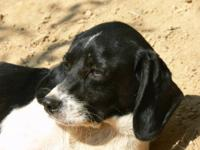 English Springer Spaniel - **michael - Small - Adult -