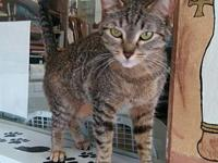 Eowyn's story 1 1/2 yr Spayed Female DSH Tabby Eowyn is