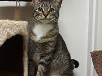 Epee's story Sweet Epee is a young kitty looking for
