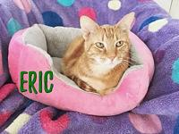 Eric's story ERIC - neutered male, domestic shorthair,
