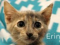 Erin's story The adoption fee is $85.00 with an
