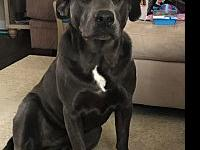Eris's story Eris is a 2 year old pit mix who is the