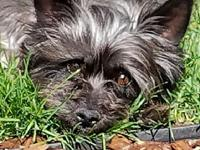 ERNIE JAY in CO's story Col. Potter Cairn Terrier