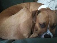 Ernie the Love Dog Needs a New Home Urgently. Ernie is