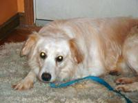 Eskimo Dog - Rocket-adopted!! - Medium - Adult - Male -