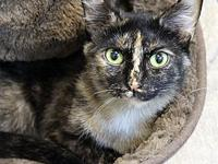 Esme's story Likes: Chin scratches and belly rubs!