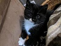 Espy's story Espy is a sweet black and white kitten,