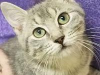 Estella's story DOB OCTOBER 2018 All of our cats and