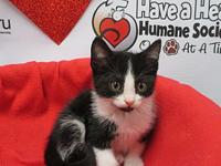 Ester's story All of our kittens are raised in loving