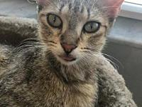 "My story Online Adoption Application Hi I""m Esther. I"