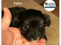 Meet Esther! Esther and her siblings were born on