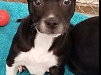 Esther's story Breed: Terrier Mix Age: 3 Months Gender: