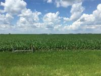 80 Acres Emmet County, Iowa All tillable farm with