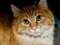 Meet Ethan Allen!   This cutie is new to the shelter.