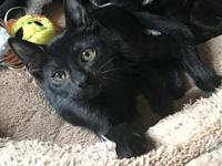 Ethan (baby male kitten)'s story Say hello to Ethan, a