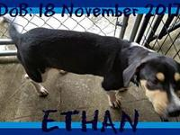 ETHAN - bonded with EVAN's story Please contact Jenny