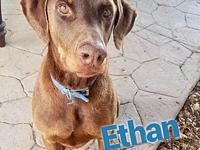 Ethan's story Ethan is a 2-3 year old, male, Doberman.