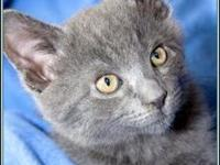 Ethan's story $97.50 FEE INCLUDES: neutering/spaying,