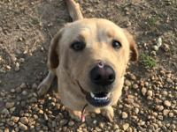 ETHEL is a very calm, gentle and loving dog.  She loves