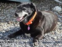 Ethel's story Ethel is a sweet 46 lbs. Senior Lab mix