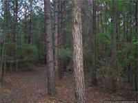 This 30 acre property is a mixed use recreational,
