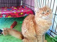 Ethel's story Pretty, Fluffy DLH Orange Tabby Female