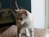 My story Hi! My name is Ethel. I'm a Siamese mix, 1