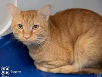 Eugene - A 4PAWS Cat's story   e-mail 4PAWS if