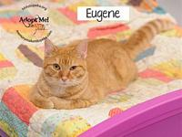 Eugene's story Meow, it's nice to meet you! My name is