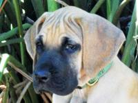 Remmington Danes has several available beautiful