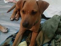 My story Evan is a 4 month old cur mix. People that