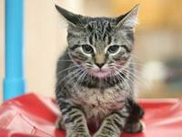Evander's story Adoption fee for cats is $65.00 which