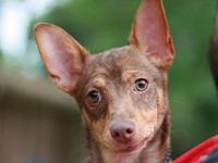 Evanora's story This puppy is in Tennessee. Adoption