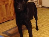 Evee is a 2 year old shepherd mix. She is small at