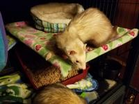 Dodger and Evie are an unusual pair. They are bonded