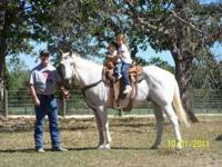 15 year old Quarter Horse Gelding. Excellant Family